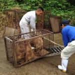 島根県美郷 山くじら生産者組合・・・イノシシを山くじらというネーミングで町おこしを行っています、弊社はトリミング肉と内臓をいただいています。
